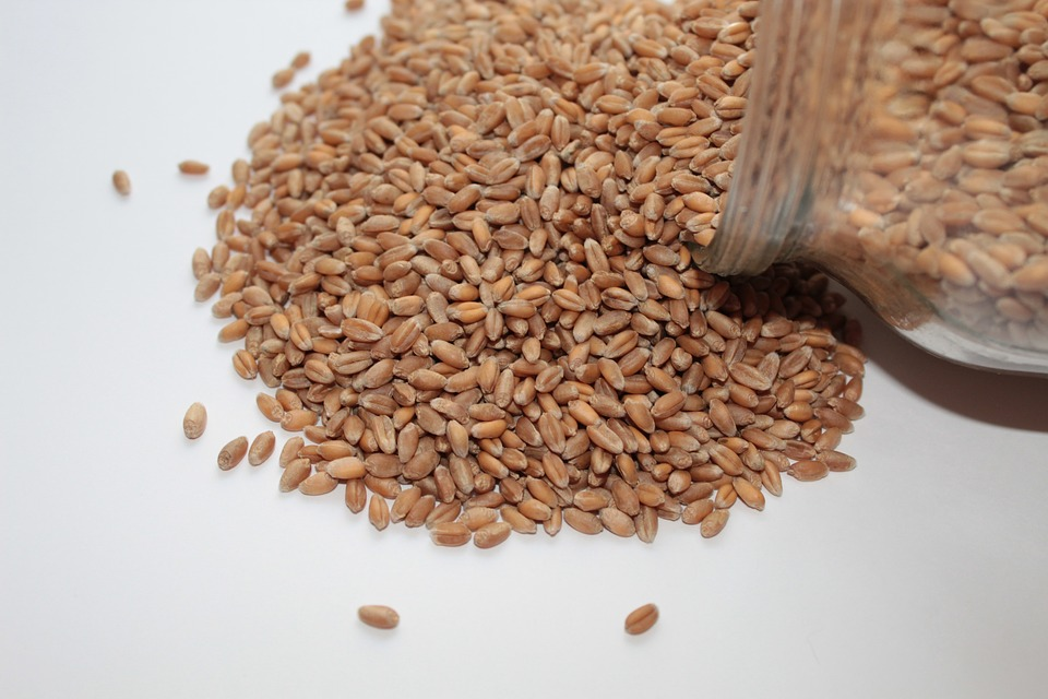 Can You Grind Wheat In A Coffee Grinder